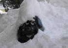 Schneezwerg_klein.jpg