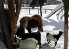 Zoo im Schnee_klein.jpg