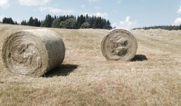 Bauernhof Titelbild